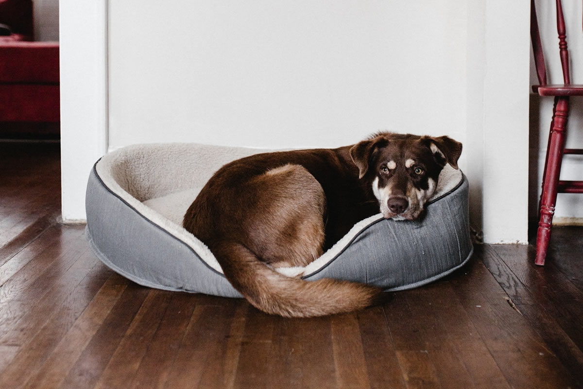 How Can I Keep My Apartment Clean When I Live With My Dog?
