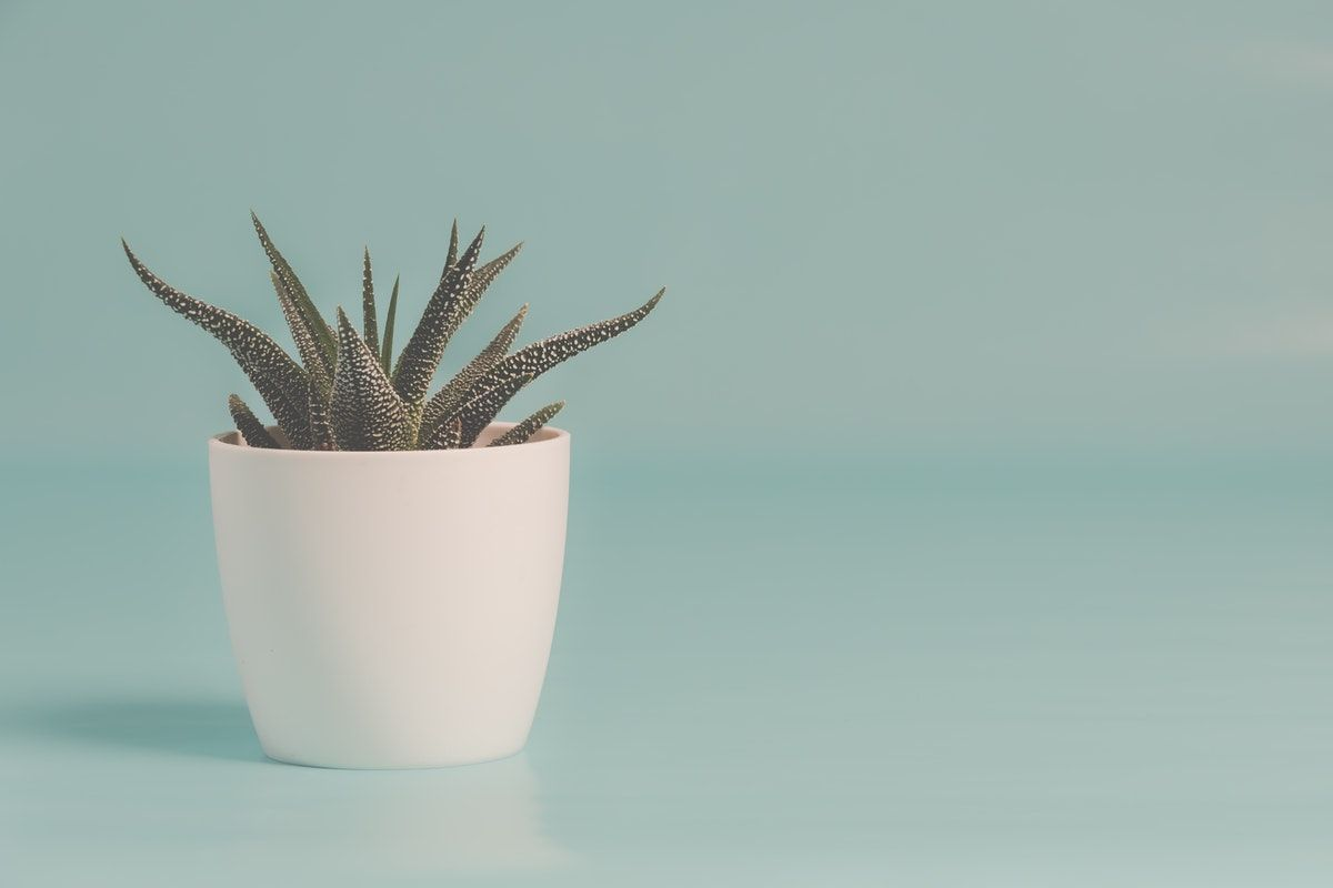Five Steps to Care for Your Indoor Plants