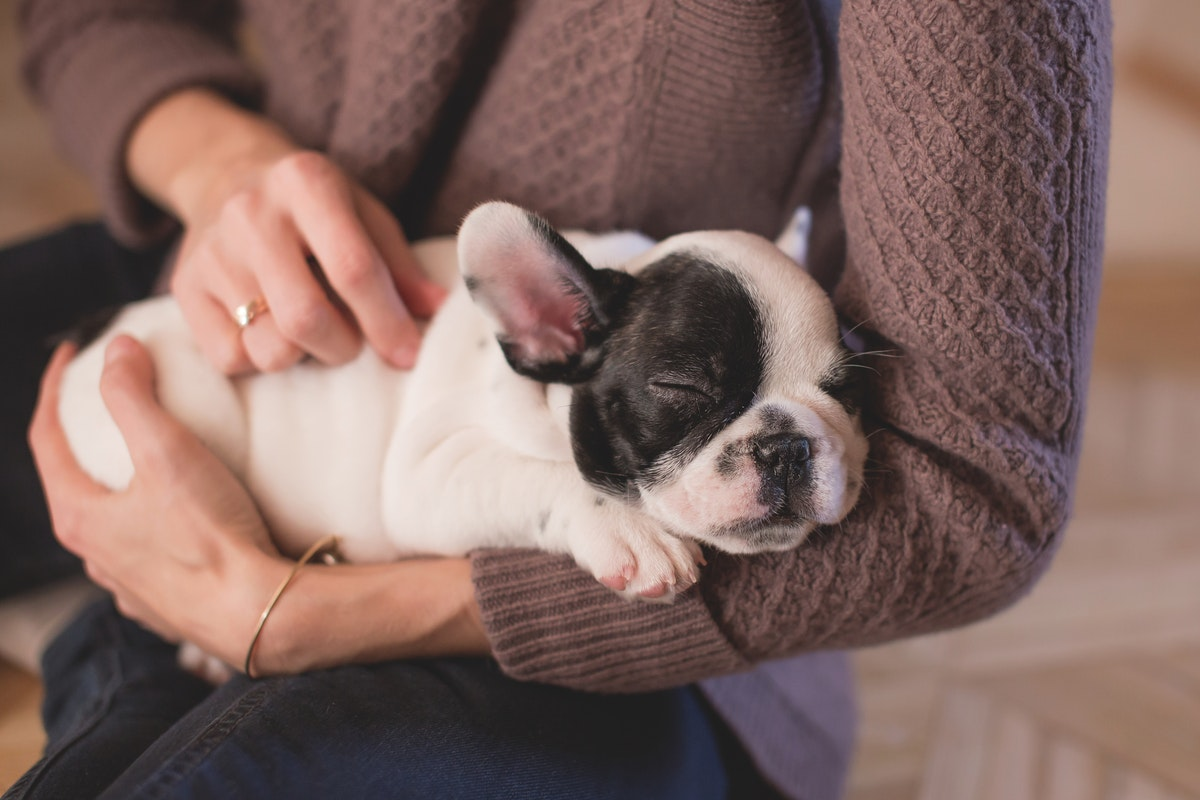 Six Tips to Prepare Your Apartment for a New Puppy